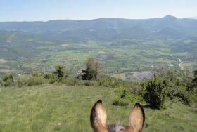 Randonnée à cheval Camping des Rosières